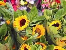 Solrosor i marknaden Royaltyfria Bilder