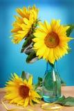 Solrosor i vase Fotografering för Bildbyråer