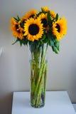 Solrosor i vase Royaltyfria Bilder