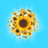 Solrosor med ljusa strålar Arkivbilder