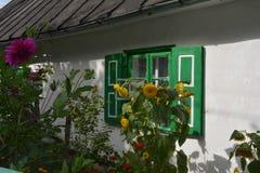Solrosor nära det vita huset Arkivbilder