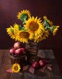 solrosor och äpplen Arkivfoto