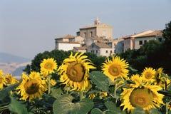 Solrosor och byn Royaltyfri Foto