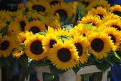 Solrosor på blommorna marknadsför i Wroclaw, Polen Arkivbild