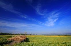 Solrosor sätter in med blåttskyen, Thailand arkivbild