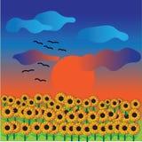 Solrosor solnedgång Arkivfoton