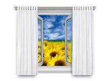 Solrosor till och med öppet fönster Royaltyfria Foton