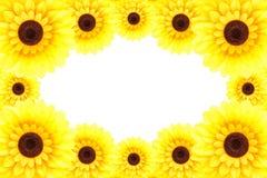Solrosram Arkivbild