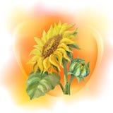 Solrosrambakgrund Royaltyfri Bild