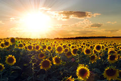 solrossolnedgång royaltyfria foton