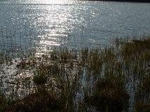 Sols reflexion på yttersidan av ett damm Arkivbild