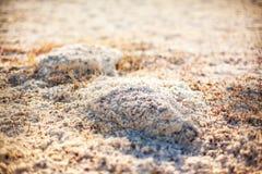 Sols salins de steppe de Kazakhstan Photos stock