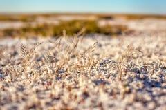 Sols salins de steppe de Kazakhstan Images stock