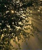 Sols strålar till och med lövverket Royaltyfri Foto