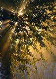 Sols strålar till och med lövverket Royaltyfria Foton