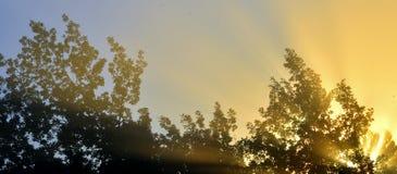 Sols strålar till och med lövverket Arkivfoton