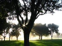 Sols strålar till och med trädfilialer Arkivbild