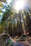 Solsignalljus till och med träden arkivfoton