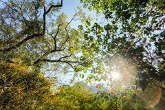 Solsken över den tropiska naturen Arkivbild
