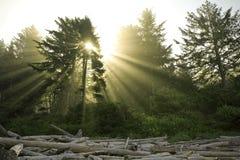 solsken 2 Royaltyfri Bild