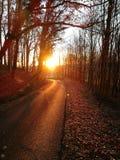 solsken Royaltyfria Foton