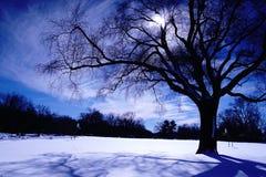 Solsken efter häftiga snöstormen 2016 Arkivbild