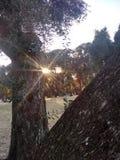 Solsken för katapultträdeftermiddag royaltyfri fotografi