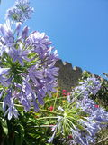 Solsken för sommar för blommavägghimmel arkivfoton