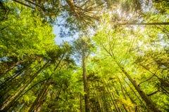 Solsken i den färgrika skogen med blå himmel och stort väder Royaltyfria Foton