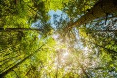 Solsken i den färgrika skogen med blå himmel och stort väder Arkivfoto