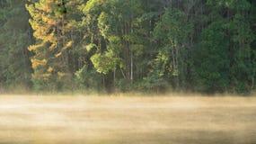 Solsken i morgonen av Sting-Ung laken. Royaltyfri Bild