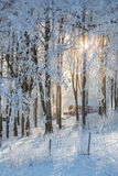 Solsken i skog Royaltyfri Bild