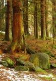 Solsken i skogen Arkivfoton