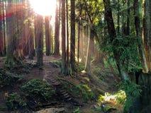 Solsken i skogen Arkivfoto