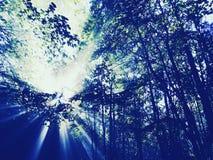 Solsken i skogen Fotografering för Bildbyråer