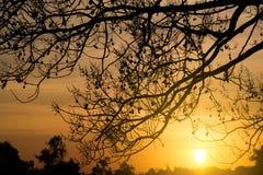 Solsken och träd i afton Arkivbilder