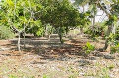 Solsken på landskap för fruktfruktträdgård royaltyfri bild