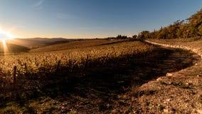 Solsken på vingårdarna Arkivbilder