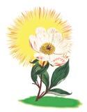 Solsken Rose Plant Block Arkivfoto