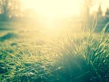 Solsken till och med grönt gräs, naturlig sommarbakgrund Royaltyfri Fotografi