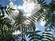 Solsken till och med molnen och växterna royaltyfria foton