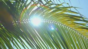 Solsken till och med palmbladet med linssignalljuset stock video