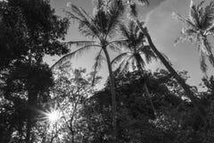 solsken till och med palmträd arkivbilder