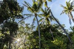 solsken till och med palmträd arkivbild