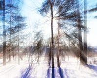 solsken till och med träden övervintrar skogen Ryssland royaltyfria bilder