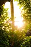 Solsken till och med träden royaltyfri fotografi
