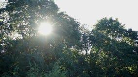 Solsken till och med träden stock video