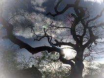 Solsken till och med träden Royaltyfri Bild