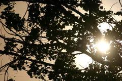 Solsken till och med trädfilialer arkivbild