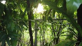 Solsken till och med trädmetallstaketet i trädgården stock video